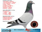 BE17-5032200 ERKEK /ORJ JOS THONE KARDEŞİ 10. NAT ARGENTON 13720 P.