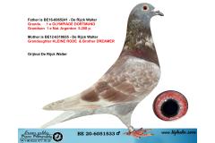 BE20-6051533 ERKEK / ORJ DE RIJCK WALTER - KLEINE RODE HATTI