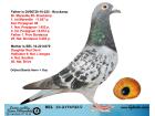 BEL13-2174723 DİŞİ / BABA BROCKAMP ANNE BAERTS HENRİ + GUY