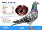 BEL13-4260119 ERKEK / CARTEUS BABASI 9 NAT. ACE KBDB - SUPER AS TORUNU