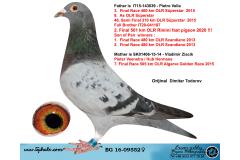 BG16-09552 DİŞİ / BABASI 3. FİNAL 460 KM ANNESİ 7. FİNAL ALGARVE GOLDEN RACE