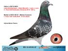 BG16-65361 ERKEK / BABASI 4. FİNAL OLR KASKADORU ANNESİ 1. FİNAL OLR SOFİA