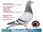 BG17-34571 ERKEK / BABADAN KARDEŞİ 1. FİNAL 505 KM OLR KALİMANCİ 2019