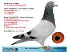 BG18-61690 ERKEK / BABASI ALFON KLAAS - ANNEDEN KARDEŞ 6 FİNAL OLR SOFİA