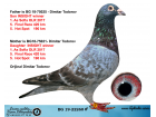 BG19-22260 ERKEK / INBREED INSIGHT - 1. ACE PİGEON OLR SOFİA 2017