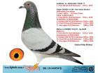 BG19-44474 ERKEK / KIZ KARDEŞİ KALİMANCİ ŞAMPİYONU