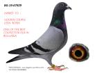 BG19-67929 ERKEK / LEEEN BOERS % 100