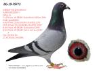 BG19-79773 ERKEK BABASI INBREED MR DARABANİ ANNESİNİN KARDEŞİ 27. MLLİON DOLAR