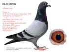 BG20-010935 BABASI INBREED DARBANİ ANNEANNESİ ALFON 4. FİNAL SOFİA OLR