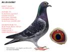 BG20-010987 ERKEK / ANNEDEN KARDEŞİ 39. FİNAL ALGARVE GOLDEN RACE