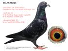 BG20-030485 IBREED MS EURO ALPIN - 1. FİNAL OLR EURO ALPIN ROMANIA 2015