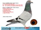 BG20-20077 DİŞİ / DİMİTAR TODOROV BABASI 11. FİNAL 420 KM OLR SOFİA