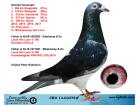 CRO13-03375 ERKEK / ORJ. P. RADOLOVİC . SÜPER YARISCI EİJERKAMP VAN LOON % 100