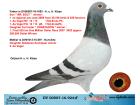 DV00507-16-924 ERKEK MR. BOLT ERKEK TORUNU ORJ. ALFON KLAAS