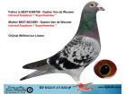 DV01217-17-533 ERKEK / GASTON VAN DE WOUWER % 100 ( KAASBOER )