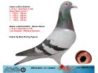 DV01697-17-1048 DİŞİ / L.B.& J. GEERINCKX % 100