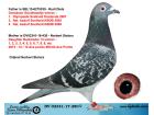 DV02341-17-280 DİŞİ / BABASNIN DEDESİ OLYMPİADE ŞAMPİYONU