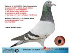 DV0241-17-238 ERKEK / GABY VANDENABEELE % 100