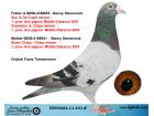 DV03022-11-431 ERKEK / BENNY STEVENİNCK % 100 INBREED CHİPO !!!
