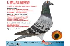 DV03200-17-680 DİŞİ / KENDİSİ 2. 163 KM OLR NORT SEA BABADAN KARDES 9. FİNAL ALGARVE GOLDEN RACE