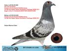 DV03220-21-232 / BABA INBREED SAGAN ANNESİ INBREED SAGAN