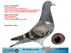 DV03220-21-238 / INREED SAGAN % INBREED KITTEL