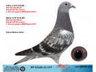 DV03220-21-377 / INBREED KITTEL !!!