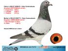 DV03616-16-717 DİŞİ / GABY VANDENABEELE % 100