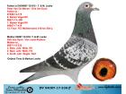 DV04087-17-338 ERKEK / PETER VAN DE MERWE - DİRK VAN DYCK - VAN LEEST PEETERS