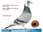 DV0446-16-627 DİŞİ / FIGO - RONDAGS