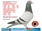 DV05138-12-2961 ERKEK / LEO HEREMANS OLYMPIADE 003 TORUNU