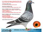 DV05536-18-277 ERKEK / KENDİSİ 61. FİNAL 505 KM OLR ALGARVE GOLDEN R. 2132 P. 2018 !!!