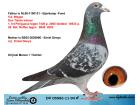 DV05583-11-94 ERKEK / BABASI V.D. WEGEN ANNESİ EMIEL DENYS - MARATON