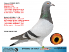 DV05892-18-369 ERKEK / BABA IBREED FIGO % 100 - ANNE FIGO GABY