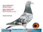 DV06339-13-409 DİŞİ / DİRK VAN DYCK % 100