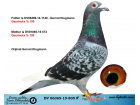 DV06369-19-805 ERKEK ./ GEERINCKX % 100