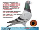 DV06497-16-0437 ERKEK / FABRY / VAN DYCK / GABY / JANSSEN YAVRUSU 5. FİNAL 449 KM