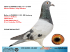 DV06599-15-88 DİŞİ / JANSSEN - HOFKENS - AD SCHAERLAECKENS