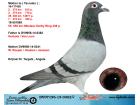 DV07196-15-0362 DİŞİ / HERBOTS - VAN LOON - HOUBEN - JANSSEN