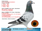 DV09683-15-367 ERKEK / KENDİSİ 35 FİNAL OLR NORTH SEA 2015