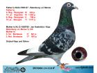 DV4900-14-310 EREK / KİPP UND SOHNE - BATENBURG MERWE % 100
