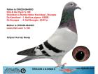 DV6339-16-0666 DİŞİ / DİRK VAN DYCK / VAN LOON