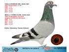 DV7274-16-1039 DİŞİ / GABY VANDENABEELE / VAN DYCK