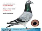 DV8020-16-0200 ERKEK / VAN DYCK - VAN LOON
