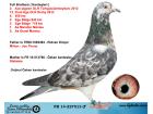 FR 14-227513 ERKEK / KARDEŞLERİ 2 AS GÜVERCİN TÜRKGÜCÜ ERMEYDANI