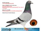 IPB 16 B 2044 ERKEK / ORJ KALLMEYER KENDİSİ 133 FİNAL OLR SÜPERSTAR