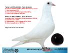 MD20-0491 ERKEK / ORJ. G. DUMITRU - INBREED WHITE BARCELONA - 1. NAT BARCELONA