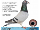 NL-18-1243968 DİŞİ / KEES BOSUA - DE RAUW ŞABLON , FİKRET BARIŞ