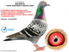 NL10-2064652 ERKEK / GERB JANSSEN ARENDONK % 100