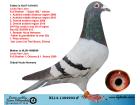 NL14-1304903 ERKEK VAN LOON HUUB HERMANS DE 015 TORUNU